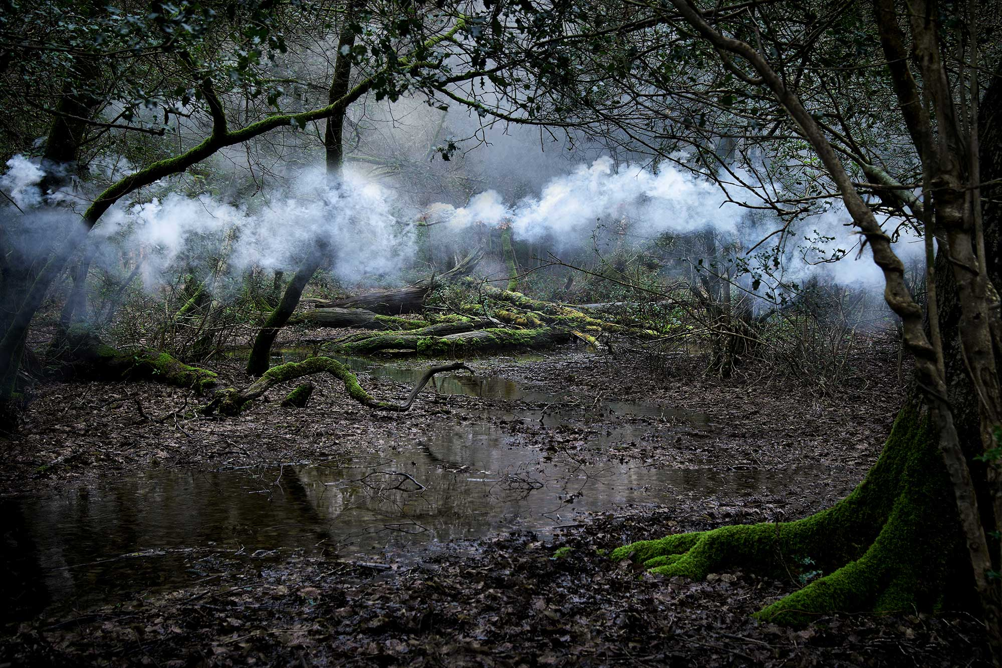Between The Trees 2014 Ellie Davies Photographer