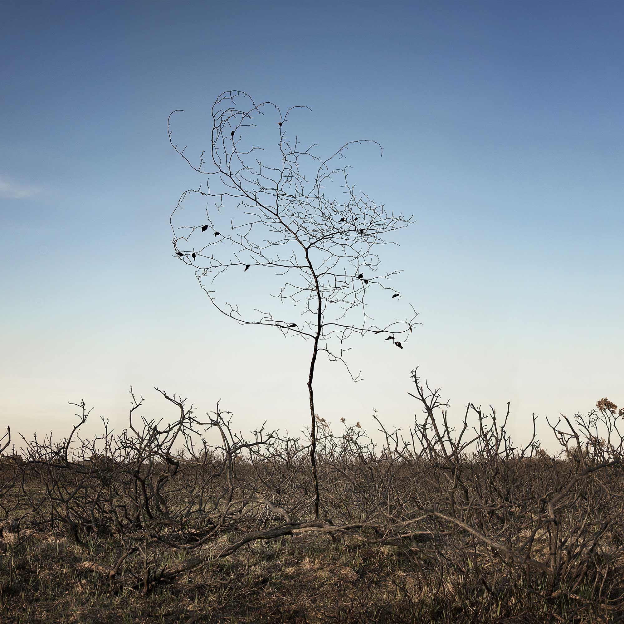 smoke and mirrors heathland  2013